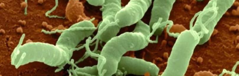 Можно ли вылечить бактериальную инфекцию без антибиотиков?